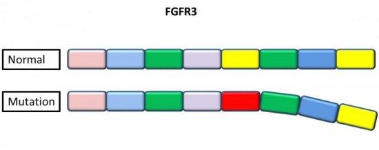 Генетическая мутация