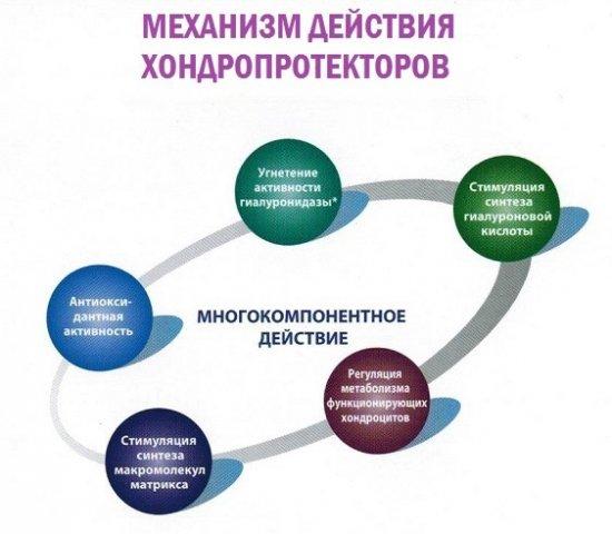 Механизм действия хондропротекторов