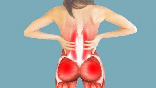 Мышцы поясницы